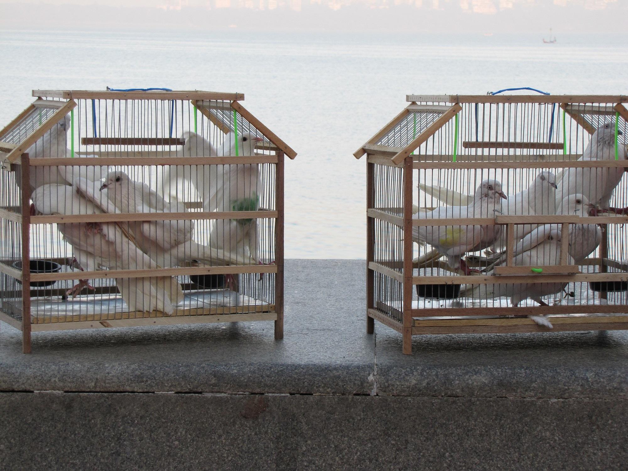 Cadoul perfect pentru porumbeii tai vara aceasta – noi accesorii pentru custi